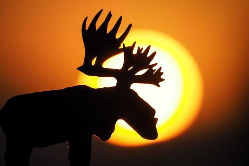 嘉義 臺灣省 台灣 tw 嘉義市 olympus75300mmf4867ii taiwan penf 日出 sunrise