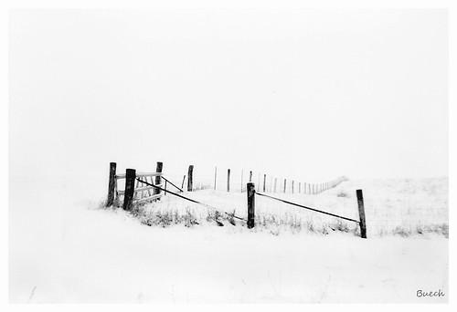 Rural Winter Scene