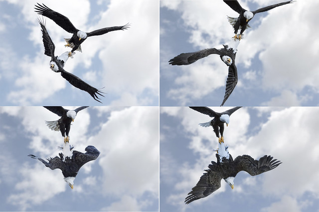 Dogfight (Eagle Fight) Sequence