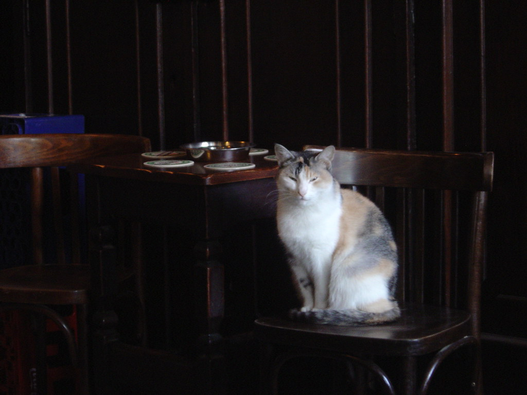 I was loitering in a pub in Amsterdam one day, a few months ago, when this cat took an interest in my business. Needless to say, it's now 'internet famous'