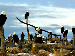 Gathering of Eagles 2006 | by AKDave