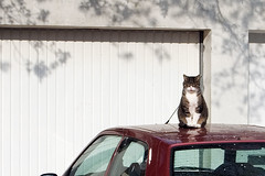 Cat on the roof | by Eike Bernhardt