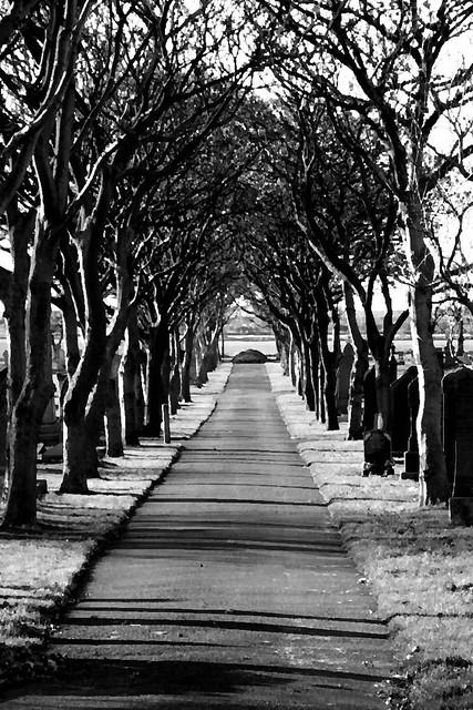 Cemetery Tree Avenue