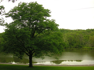 Oak Tree and lake | by blmurch