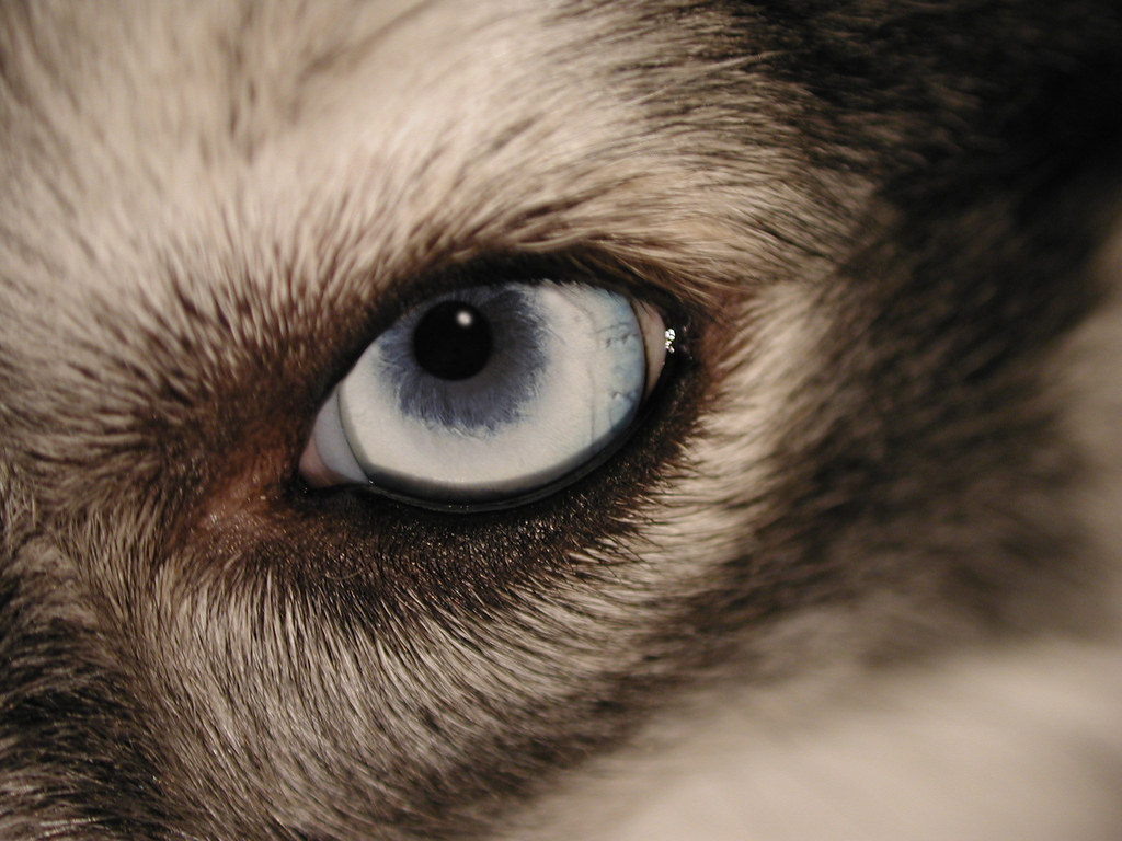 Silmät Rähmii