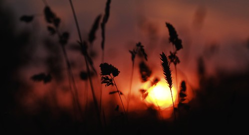 sunset grass bokeh fujifilm xm1