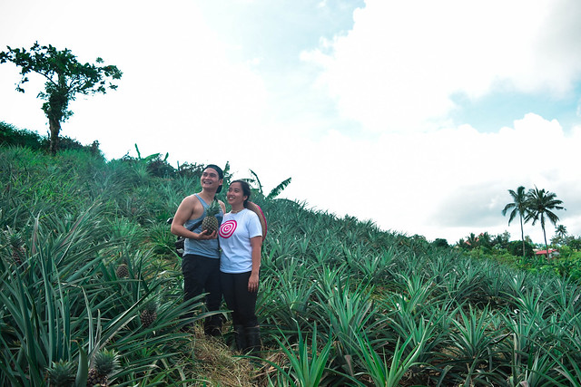 Pineapple Farm, Tagaytay City, PH