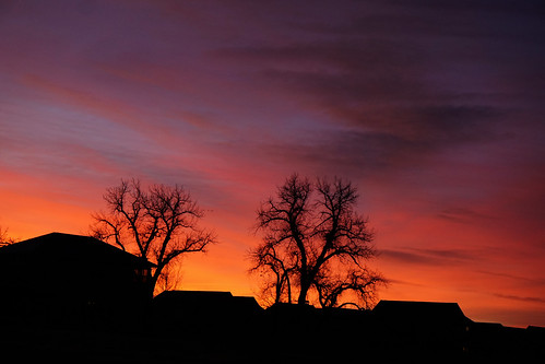 sunrise dawn cottonwoodtree cottonwood rooftops silhouette redsky trees morning whennightbecomesday limbs branches leaflesstree coloradodawn coloradosunrise atardecer amanecer dazzlingdawn