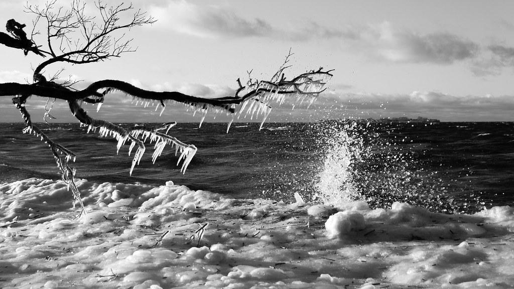 Frozen trees at Baltics