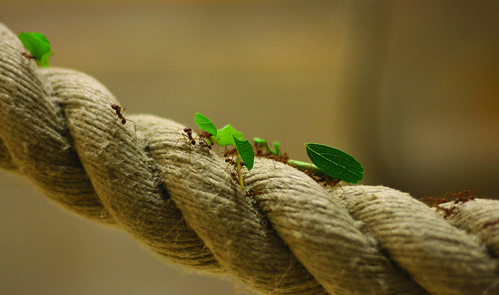 Leaf cutter ants by Laurence Dunford