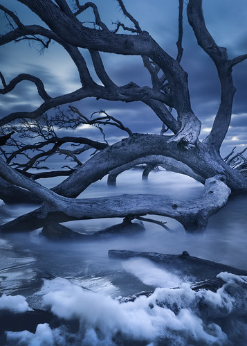 boneyardbeach boneyardjourneys canon driftwoodbeach georgia jekyllisland winter atmosphere bluehour clouds coast cold color dark dawn driftwoodwater landscape longexposure nature seafoam seascape shore tree water