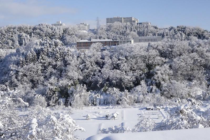 Snow Sunny