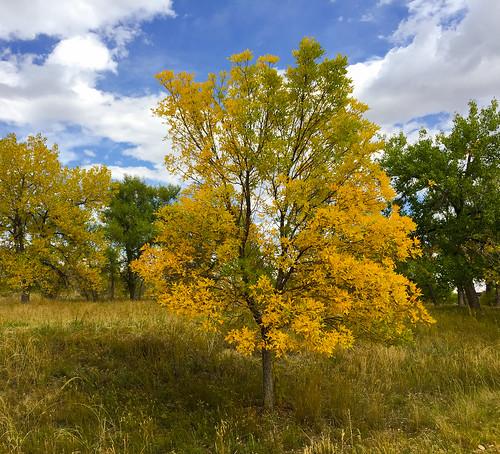 colorado unitedstates us fall autumn tree sky landscape grass martinwitt