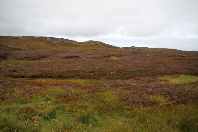 Moorland near Strathy Point
