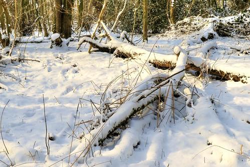 knavesmirewood knavesmirewoods woodlandtrust woodland woods york yorkshire nature snowscene snow uk britishcountryside countryside