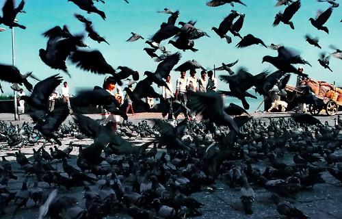 world travel reise viajes asia southasia southernasia india mumbai bombay pigeons animals birds animales tiere tauben palomas städte street stadtlandschaft streetlife streetart city ciudades cityscape cityview urban urbanlife outdoor