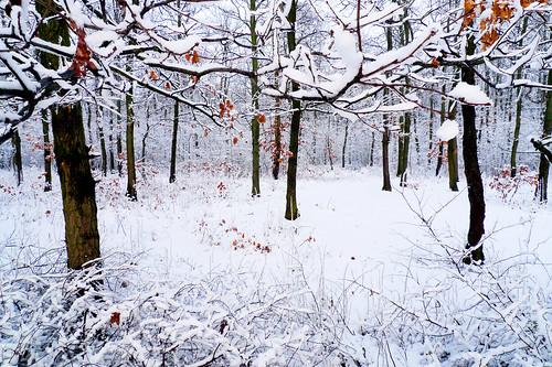 landscape ilfov românia vaduanei brănești iarnă winter lx3 panasonic pădure
