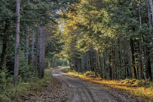 nature landscape road country rural fall autumn foliage hiawatha nationalforest michigan upperpeninsula woods forest