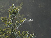 Výhled z Boubína, foto: Petr Nejedlý