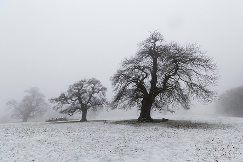 canon6d croftcastle historic shawnwhite bold cold deciduous dreamy enchanting fog hardwood landscape magical snow spiritual tree trees weather winter wonder woodland place croft england unitedkingdom gb