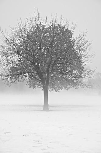 2018 2018©rpd'aoust aperture3 arbres bw blackwhite brume canada d90 février hiver mist montréal neige nikkor18135mm nikon nikond90 noiretblanc parcjarry snow trees villeray winter