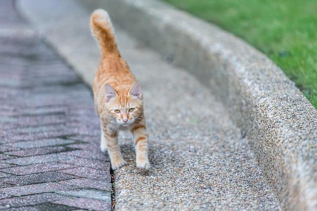 My Feline Fellow 貓科朋友
