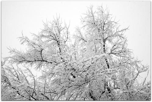 1800 29mm 5d 5dclassic 5dmark1 5dmarki aperturepriorityae canon colorado coloradosprings didnotfire digital ef1635mmf28liiusm eos eos5d esplora evaluative bokeh explore geo:lat=3893083779 geo:lon=10489145279 geotagged gleneyrie nature northamerica telephoto wildlife explored f220 flashoff iso3200 photo pic pretty renown snow snowing ultrawideangle unitedstates usa wideangle tree sky landscape monochrome black white bw