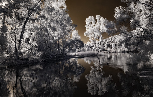 lakejennings infrared infraredphotography ir convertedinfraredcamera water trees sky reflections foliage surreal nature naturalbeauty