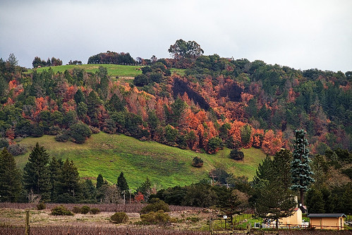 santarosacalifornia naturephotography stevenpmoreno trees hillside stevenmorenospix2018 northerncalifornia outdoor canonphotography landscape sonomacounty winecountry