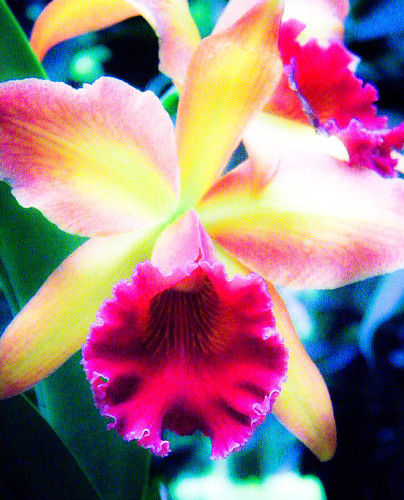 Orchid run through a photo app