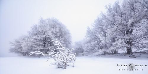 alavavision euskadi loschicosdealba nikon nikond7200 sigma sigma1020mm urbasa vizcaya amanecer arbol landscape naturaleza nature nieve paisaje snow sunrise tree estellaoriental navarra españa es