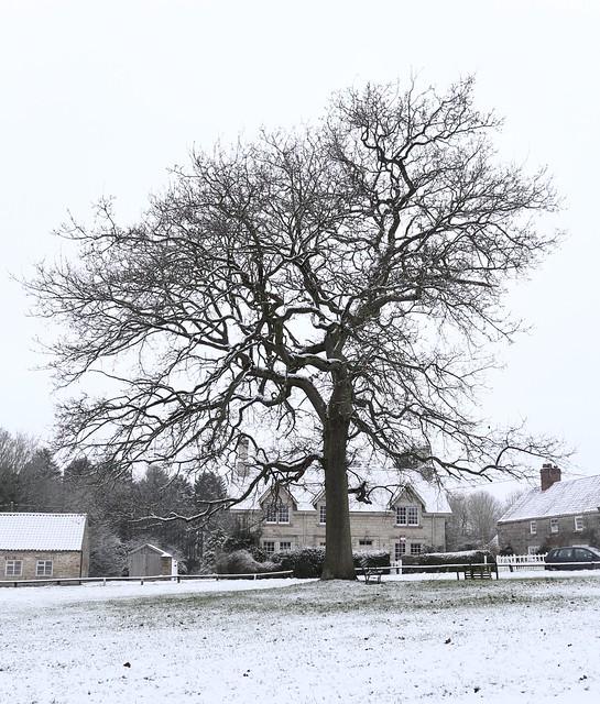 Winter tree at castle Howard..