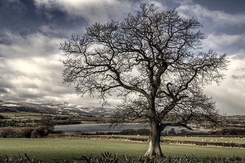 llangorse langorse winter lake breconbeacons snow cold bleak sunshine showers dusting nationalpark wales cymru mountains tree