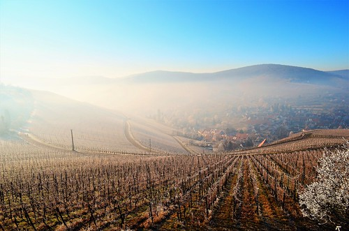 landscape view nature fog foggy misty outdoors hill vineyards light color sky travel stetten kernen remstal badenwürttemberg germany europe details sunlight