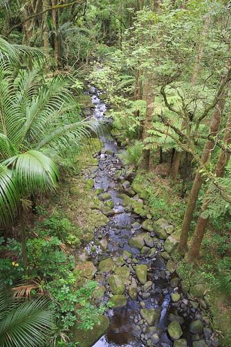 trees stream reserve bush walk dfa28105f3556 pentax pentaxk1 outddor