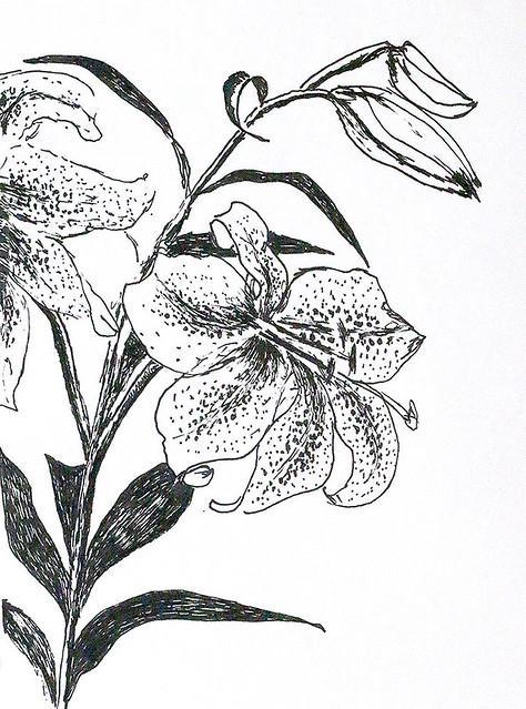 Jedan od cvjetnih crteža cvijeća u crvenom i bijelom drvenom ugljenu na papiru s vodom olovke s olovkom