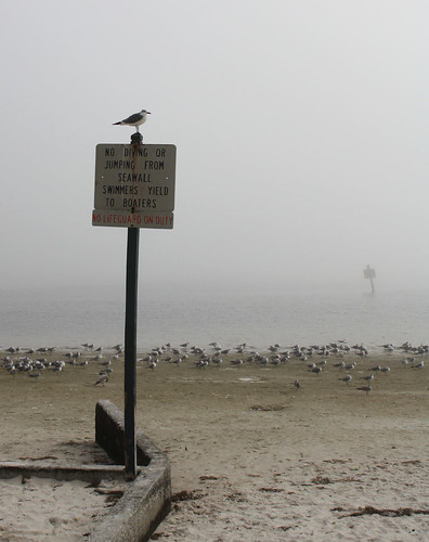 pineislandstatepark florida gulfcoast beach ocean water shore park fog mist atmosphere depressing