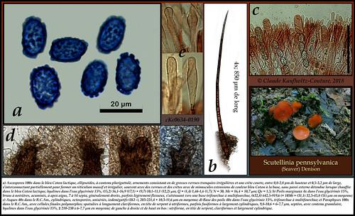 Planche micrographique