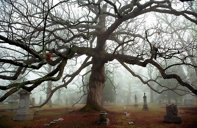 "Cincinnati – Spring Grove Cemetery & Arboretum ""Foggy Morning At Old Oak Tree"""