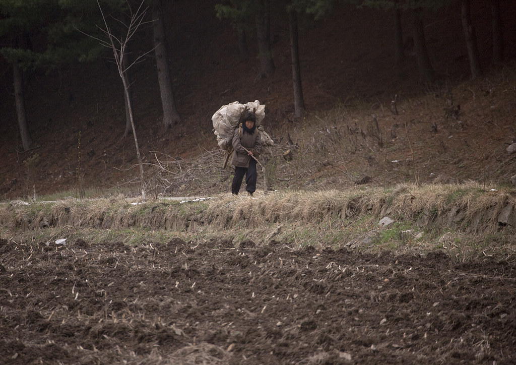 North Korean woman carrying a heavy load on her back in the countryside, North Hwanghae Province, Kaesong, North Korea
