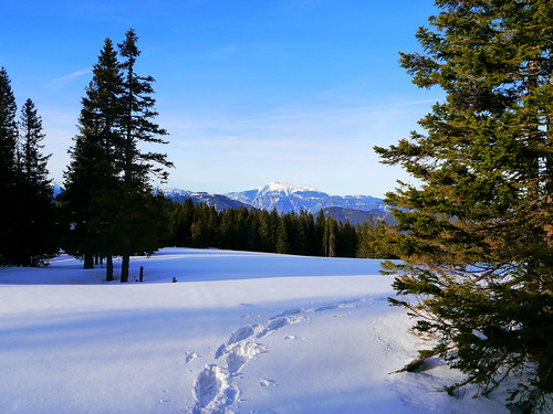 wanderung20180125 arabichl wechsel wechselgebirge alpen alps winter schnee snow schneeberg bäume trees wald forest wiese meadow himmel sky landschaft landscape berge mountains molzegg steyersbergerschwaig alm alp kirchbergamwechsel niederösterreich loweraustria österreich austria autriche fichten firs spruces