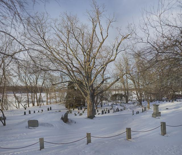Tree in Old Burial Ground cemetery, Wakefield, Massachsuetts (2017)