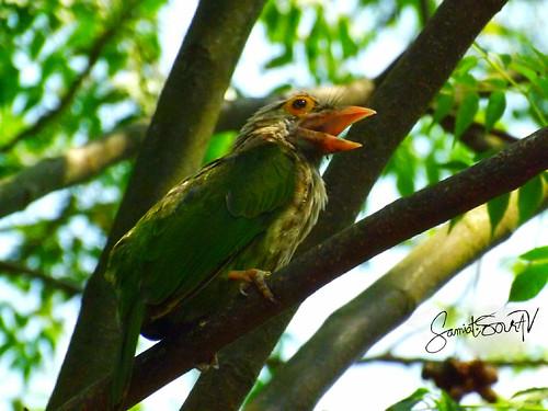 bangladesh flickrheroes flickrfriday flickrestrellas fly bird green outdoor lights tree fujifilm