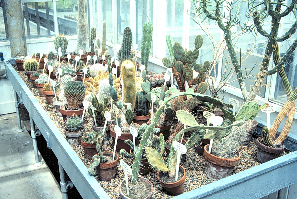 Cactus bench | Cacti are an evolutionarily successful group