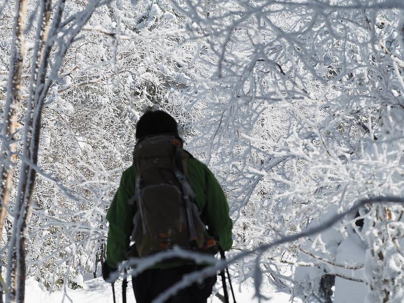 樹氷の森を抜ける