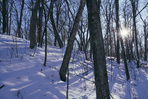 mn minnesota wildriverstatepark hills snow snowcovered trees winter centercity unitedstates us