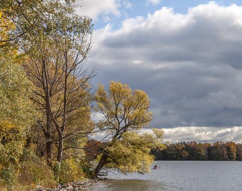 autumn princeedwardcounty ontario canada lakeontario lakeshore maple mapletree leaves fall lakeonthemountain lake