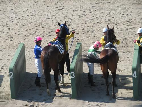 船橋競馬場の上位入線馬