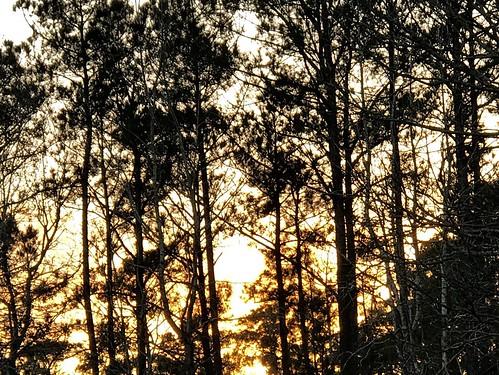 wilmington sagegirl iphone7plus outdoor nature light silhouette trees sunset
