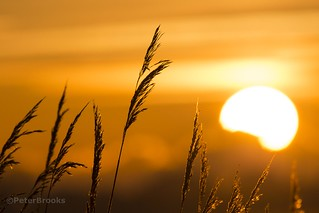 Sunrise at Westrise Marsh
